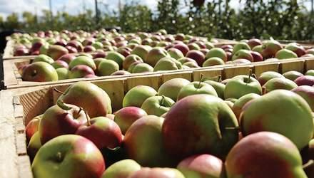 Японські вчені винайшли робота-збирача фруктів