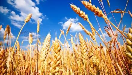 Йорданія придбала українську пшеницю