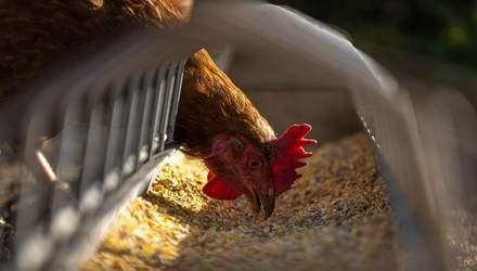 Таиланд хочет закупать украинские корма