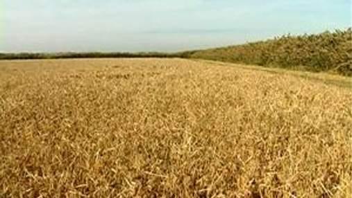 Минагропрод прогнозирует стабильные цены на зерно в начале сезона