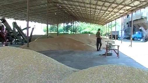 Мінагропрод: Цьогорічний врожай зернових складе 47,2 млн тонн