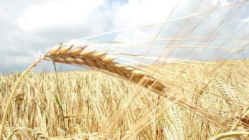Запасы зерна в Украине сократились на 20% в сравнении с прошлым годом, — Госстат