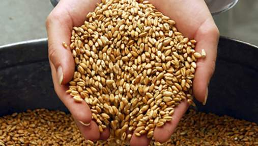 В этом году Украина соберет 63 млн тонн зерна — УАК
