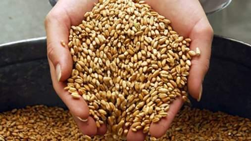 Правительство не планирует вводить ограничения на экспорт зерна, — Игорь Швайка