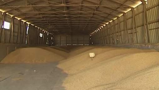 Украинские аграрии способны выращивать почти 100 млн тонн зерновых