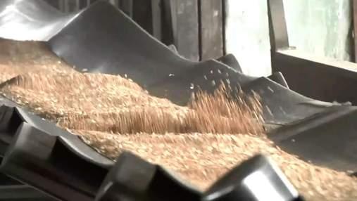 Переориентация с СНГ на Северную Корею: украинские аграрии увеличили экспорт зерна