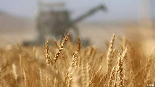 Травневі холоди знищили майже третину врожаю ягід і фруктів в Україні