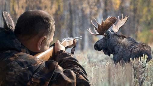В Україні знову дозволили полювати на лосів