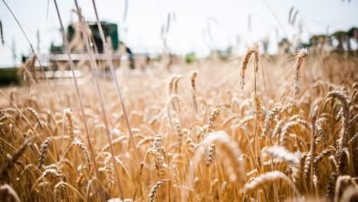 Украина в 2017 году экспортировала рекордное количество зерна: эксперты озвучили цифры