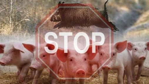 Чума свиней: на кордоні Польщі з Україною посилили митний контроль