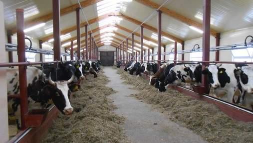 Як влада розподіляє державні агродотації в галузі тваринництва
