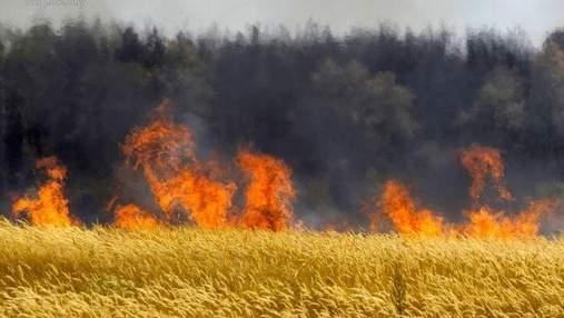 На Херсонщині згоріли 170 гектарів пшениці