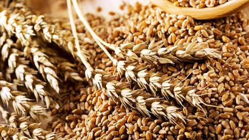 Максим Мартинюк: експорт зернових стабільно поповнює казну