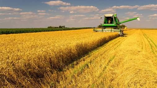 Сколько Украина собрала зерна: официальные данные на 8 августа