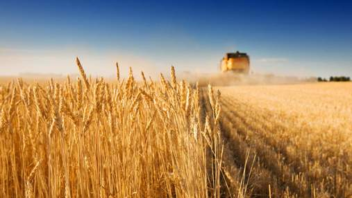 Украину ждёт коллапс из-за рекордного урожая: озвучена угроза