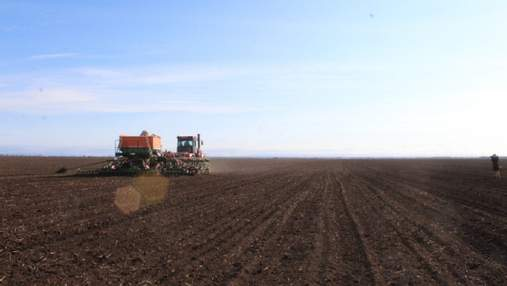 Урожай зерна в Украине: оптимистичные и пессимистичные прогнозы