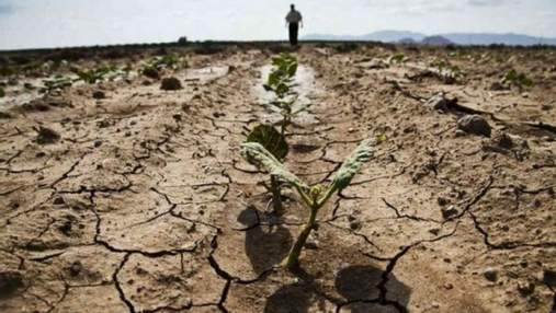 В Одесской области фермер совершил самоубийство из-за потери урожая