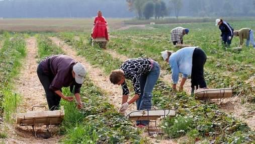 Больше, чем за рубежом, – украинский фермер о зарплатах рабочих