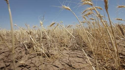 Самоубийство фермера на Одесщине: аграрии в отчаянии и жалуются на бездеятельность государства