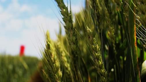 Вето Зеленского, потерянные паи и прогнозы на урожай-2020: самые важные агроновости недели