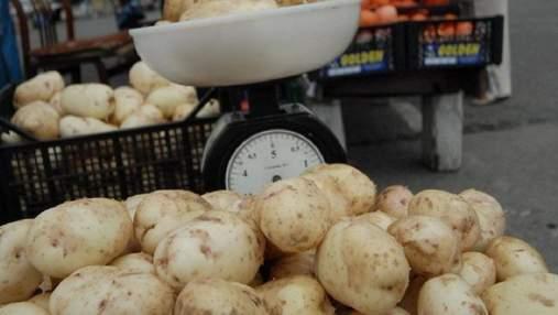 Молодая украинская картошка может сгнить в полях