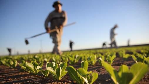 Фермеры в Украине исчезают как класс