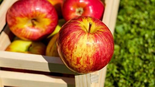 Урожай фруктов-2020: что погибло и какие будут цены