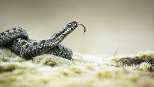 Возле Львова из-за коронавируса закрылась первая в Украине змеиная ферма