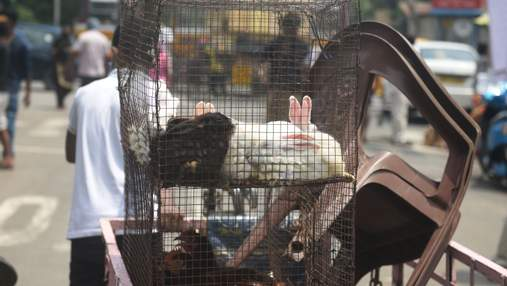 Кролики і свині: Європарламент вимагає заборонити фермерам тримати тварин у клітках