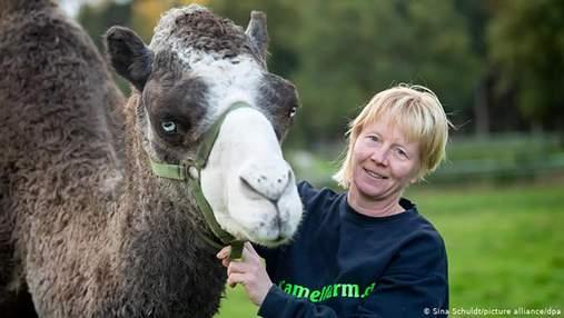 В Германии начали производство верблюжьего молока: интересные детали