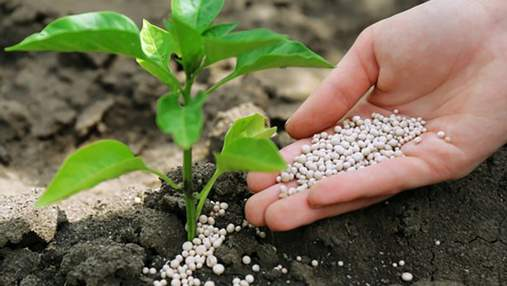 Украина установила рекорд экспорта удобрений – планка поднялась до 60 миллионов долларов