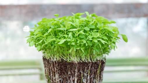 Що потрібно знати про мікрозелень: користь та як правильно вирощувати
