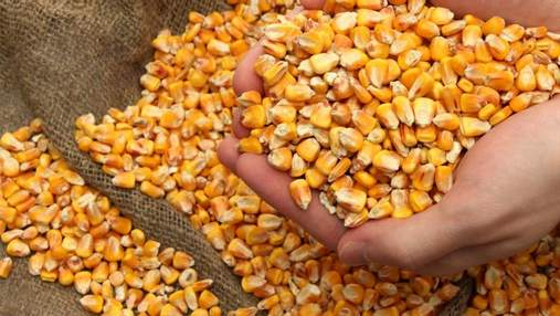 На Кировоградщине исчезла кукуруза на 50 миллионов гривен