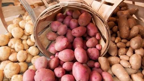 Польский фермер утилизирует тысячу тонн картофеля