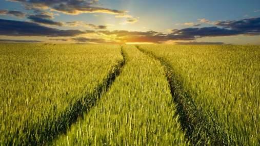 Как защитить зерновые и увеличить урожайность