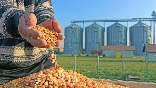 Китайская компания хочет построить завод по переработке кукурузы в Украине: сумма инвестиций