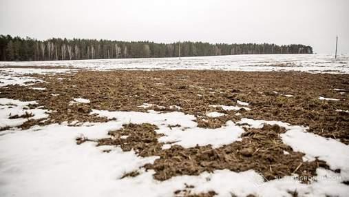 Крымский фермер засеял заснеженное поле кориандром