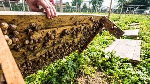 Найприбутковіші нішеві агросектори: від мікрогріну до равликів – список
