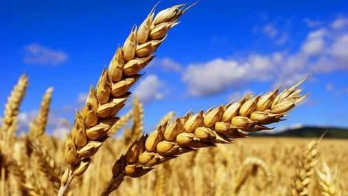 Египет закупил украинскую пшеницу