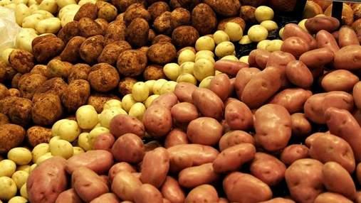 Импорт картофеля в Украину за последние два года вырос на фантастические 2500%