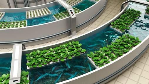 Креветки в пустелі, або Аквапоніка й агроакваферми – майбутнє продовольчої безпеки світу