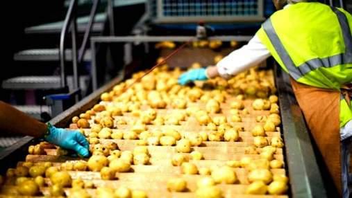 На Львовщине построят завод по переработке картофеля за 7 миллионов долларов