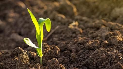 Вплив препарату Пончо™ Вотіво на комплекс фітопатогенних нематод на кукурудзі