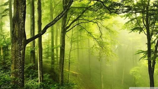 День лесов: что угрожает украинским лесам и что может сделать каждый для их сохранения