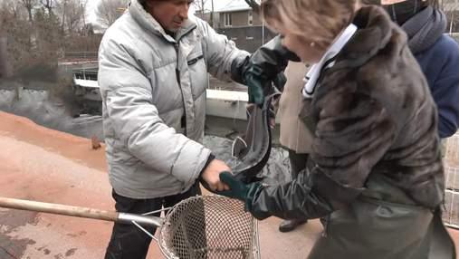 Зберігають найдавніший вид риби: на Обухівщині розводять рідкісних осетрів