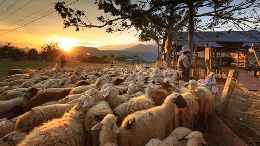 Органічне сільське господарство: що це таке і як працює