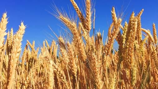 Українське зерно годує 150 мільйонів людей