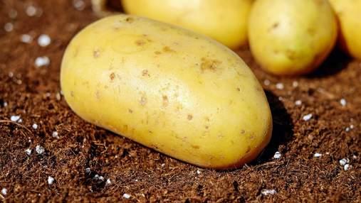Картоплярам виділили компенсації: на які гроші розраховувати