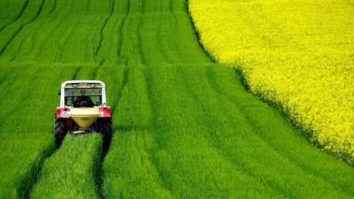 Запаси насіння ріпаку у світі зменшаться