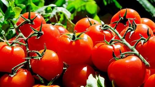 У турецьких помідорах виявили шкідника